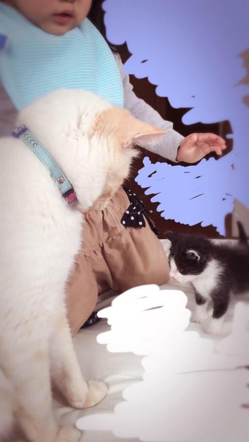 山口県山口市宮野美容室シューケット,ブログ,猫,猫カフェ,猫無料,さわれる,ヘアカラー,キッズスペース
