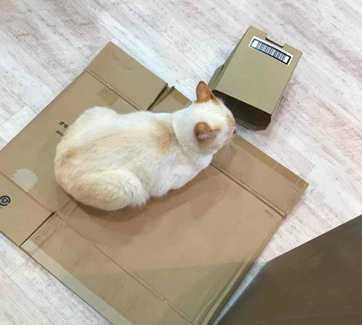 山口市 美容室 美容院 シューケット 猫カフェ ネコ店長 保護猫 膝のり猫