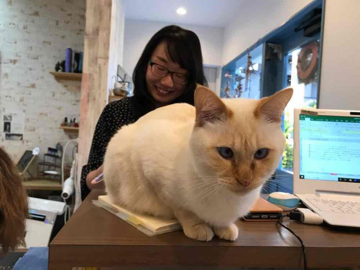 山口市/美容室/美容院/シューケット/猫カフェ/ネコ店長/保護猫/膝のり猫