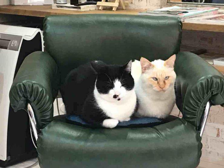 山口市 美容室 美容院 シューケット/猫カフェ/保護猫/防府市/萩市/津和野町