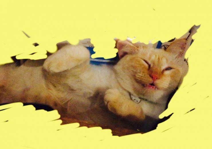 山口県山口市宮野美容室シューケット/ブログ/猫カフェ/プライベートサロン/